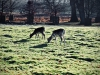 Dunham Massey Winter Walk [01/12/2019]