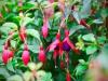 Garden Wildlife [01/07/2020]