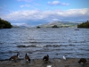 Brant Fell, Bowness-on-Windermere [25/09/2020]