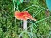Whinlatter Forest, Keswick [01/10/2020]
