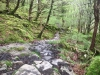 Capel Curig to Swallow Falls Loop